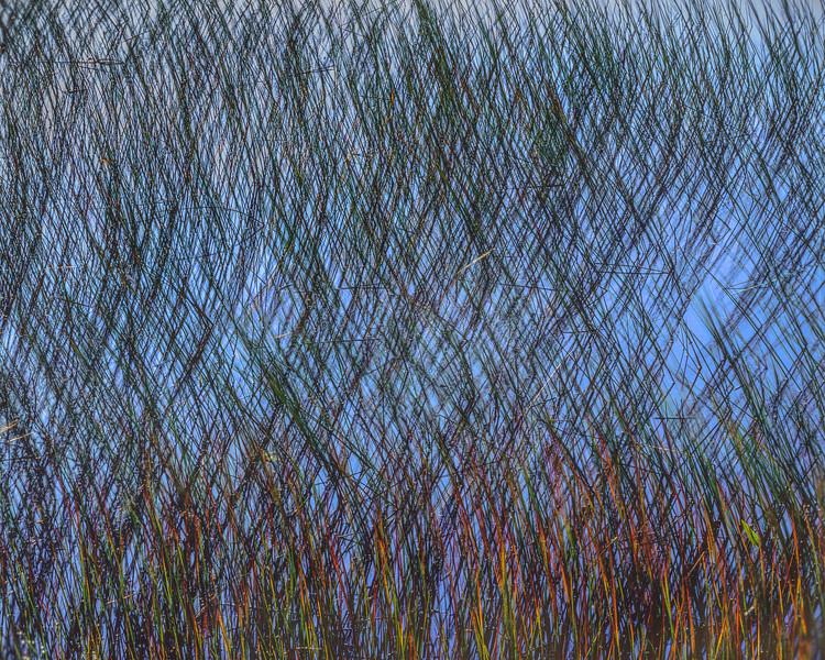 Waving Crossed Reeds