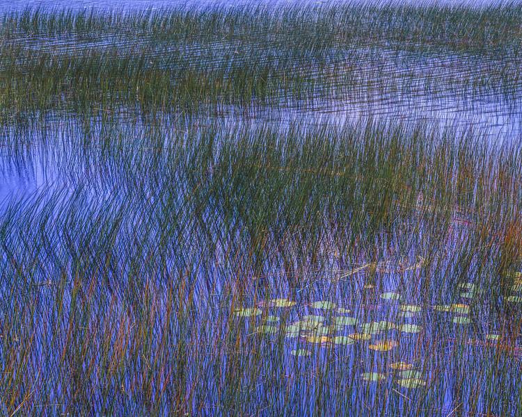 Crossed Reeds & Blue Water