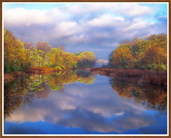 Water-shields And Oak Leaf