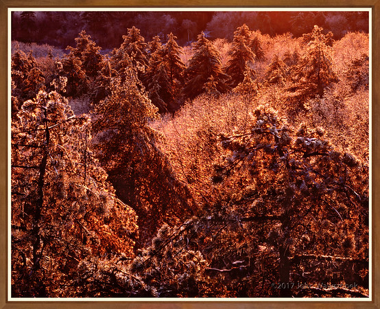 Ice Storm At Sunset I