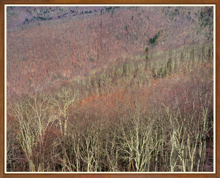 Blue Ridge Hillside I