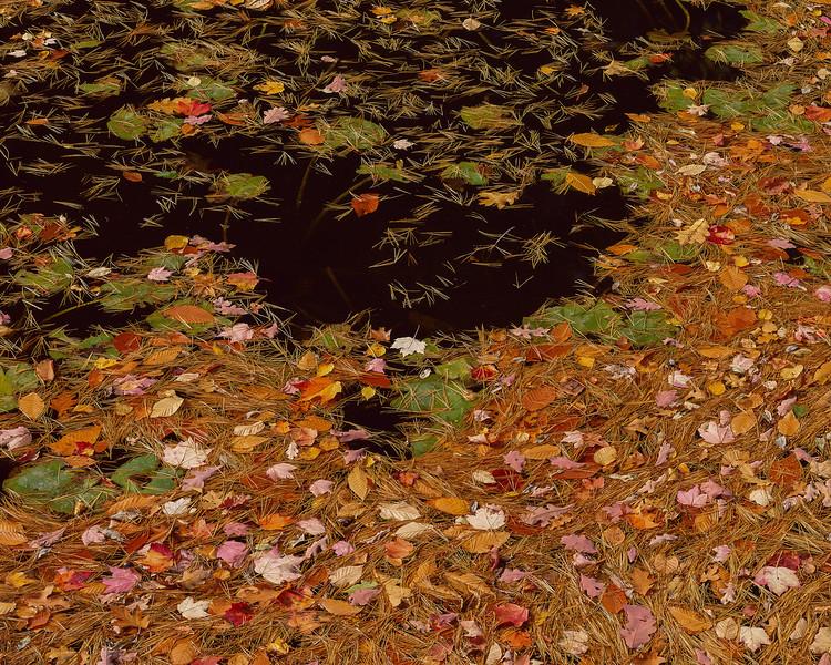 Pine Needle, Leaves & Black Water