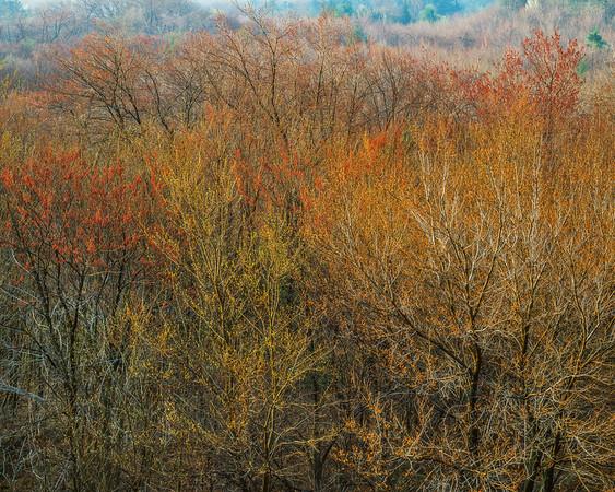 The Pike Again, Same Trees