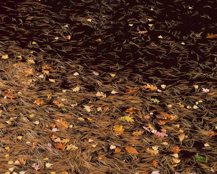 Black Water And Pine Needles III