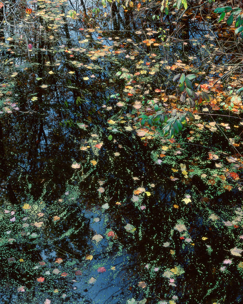 Leaves And Light On Black Water