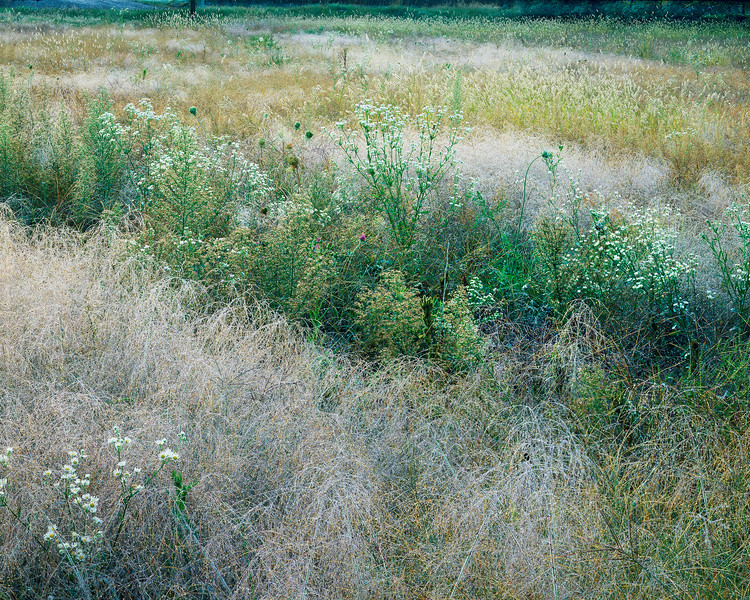 Meadow With Morning Dew II