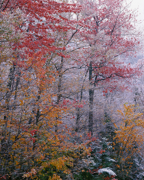 Last Leaves And First Snow I