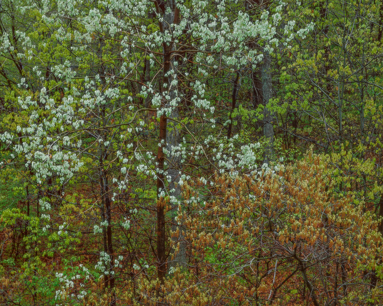 White Blossoms and Golden Seeds