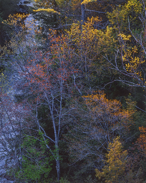 Budding Trees Beside a Stream