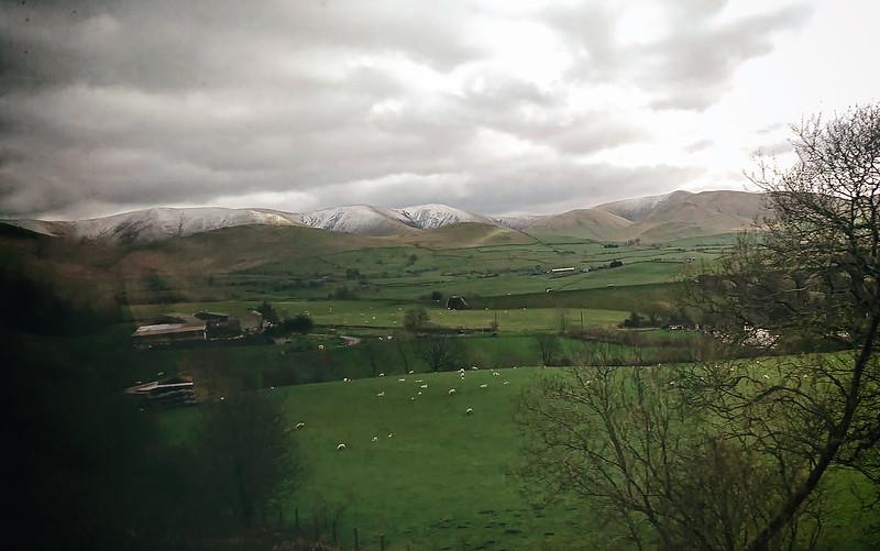Glasgow - London. Sheep - lots of sheep @ Scottish countryside April 2016.
