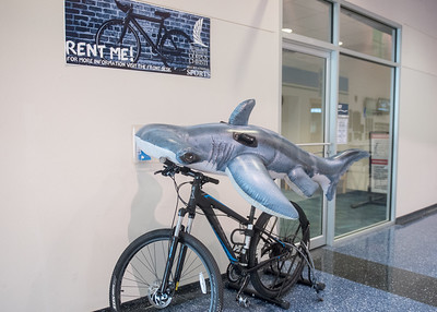 Hunter the Hammerhead rents a bike at Island Hall for a peaceful ride around the Island University.  Learn about TAMU-CC's participation in Shark Week:  http://bit.ly/2uIUKYq