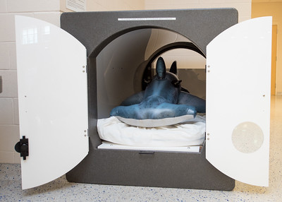 Hunter the Hammerhead takes a snooze in the sleeping pod at the Dugan Wellness Center after a long day exploring the Island University.  Join us in celebration of Shark Week at Brewster Street Icehouse: http://bit.ly/2taqLoa