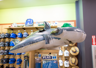 Hunter the Hammerhead tries on some Islander swag in the University Bookstore.  Join us in celebration of Shark Week at Brewster Street Icehouse: http://bit.ly/2taqLoa
