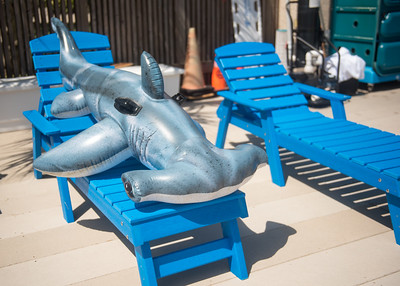 Hunter sun-bathes on a beautiful day on the Island University.   Join us in celebration of Shark Week at Brewster Street Icehouse: http://bit.ly/2taqLoa