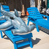 """Hunter sun-bathes on a beautiful day on the Island University. <br /> <br /> Join us in celebration of Shark Week at Brewster Street Icehouse: <a href=""""http://bit.ly/2taqLoa"""">http://bit.ly/2taqLoa</a>"""