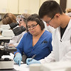 Professor Sella Doyungan assists Lorenzo Garcia with the micro biology lab.