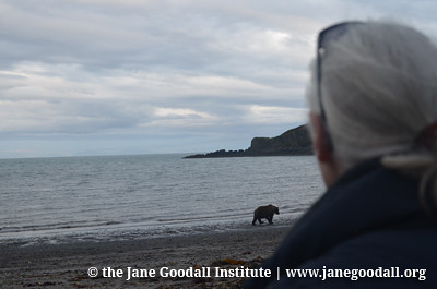 Jane observing the bears at Katmai National Park in August.