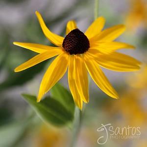Reachingflower_2