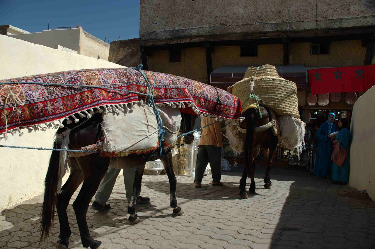 There are an estimated 4,000 working mules, horses and donkeys - known locally as the 'Medina Mercedes' - in Fez's old town.