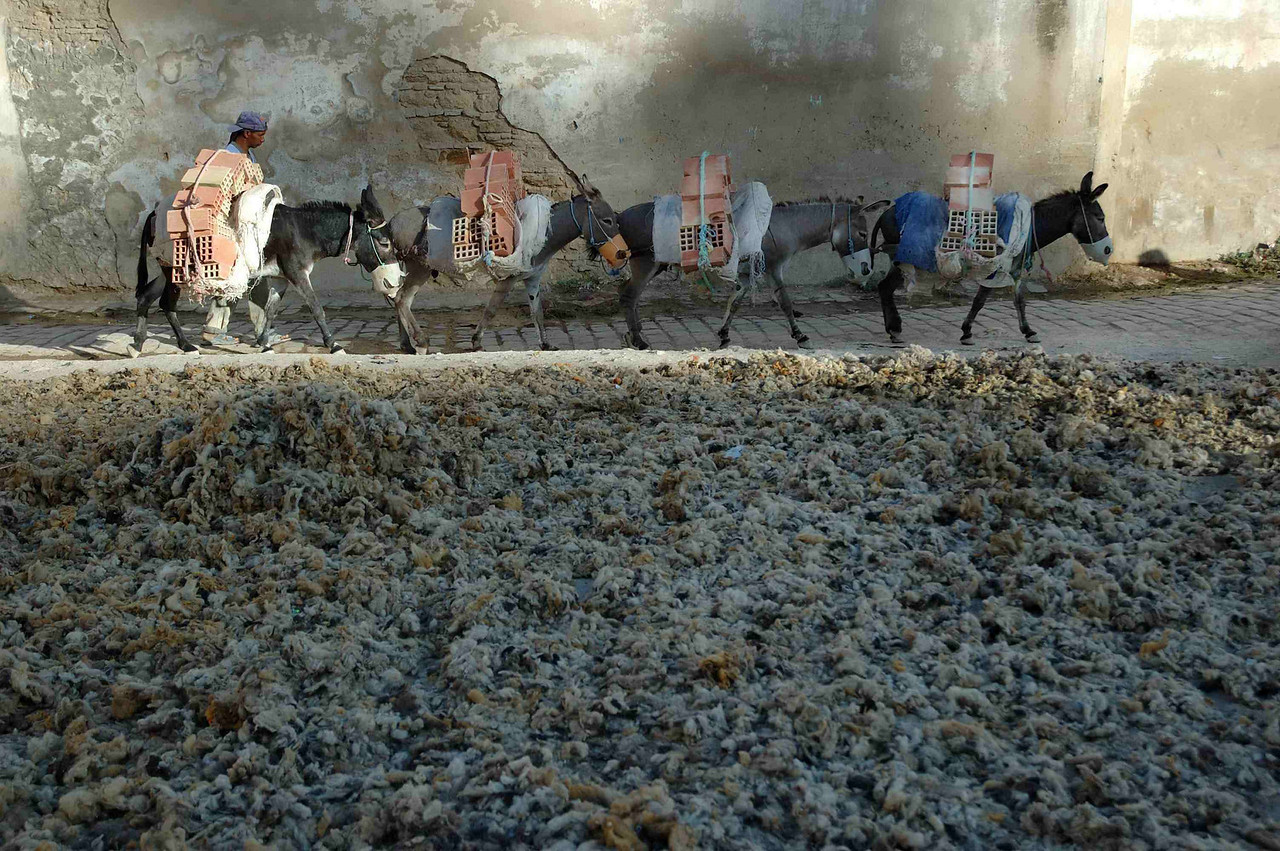 A caravan of donkey hod-carriers passes a mass of drying wool outside the tannaries in Fez.