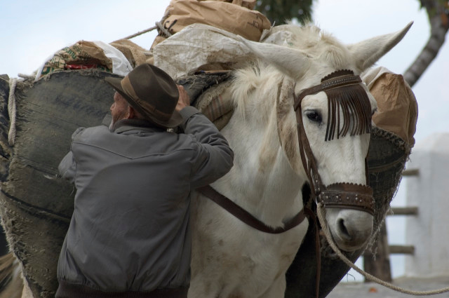 Working horses and mules are still central to rural life in remoter parts of Andalucía (here Alpujarras)