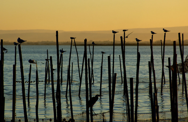 La Albufera is a breeding ground and sanctuary for many thousands of migrating and indigenous birds.