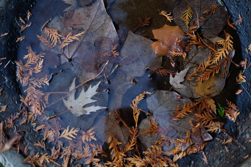 LEAVES IN BIRD BATH