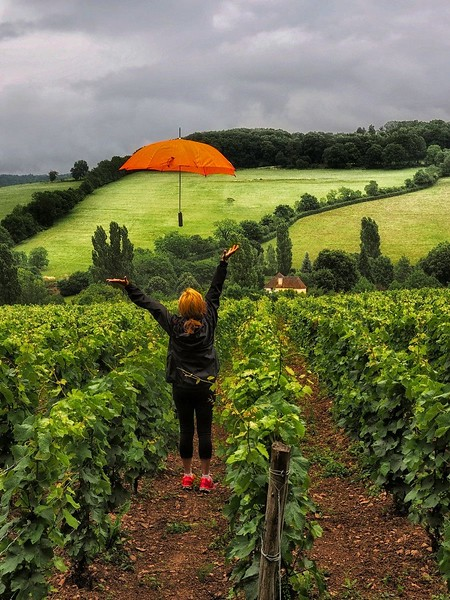 """Umbrella in the wine fields of Burgundy"""