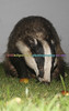 BADGERS_005