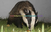 BADGERS_009