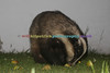 BADGERS_011