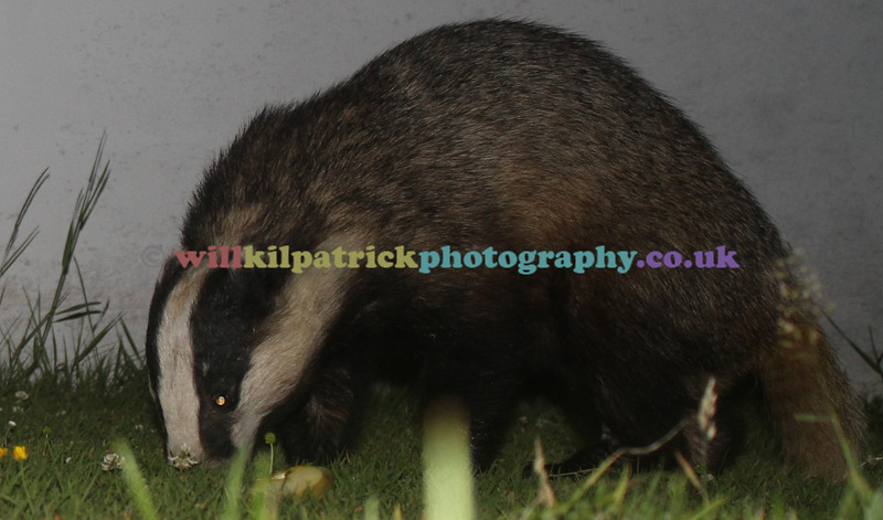 BADGERS_001
