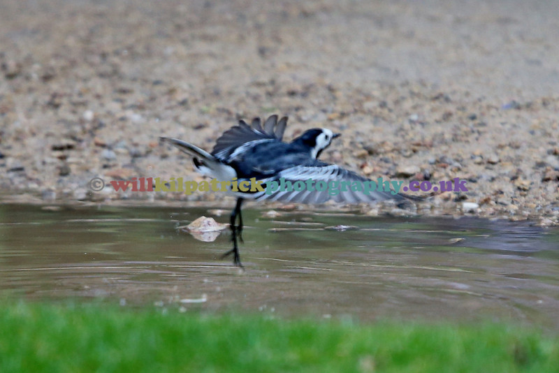 BIRDS_020