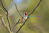 BIRDS_029