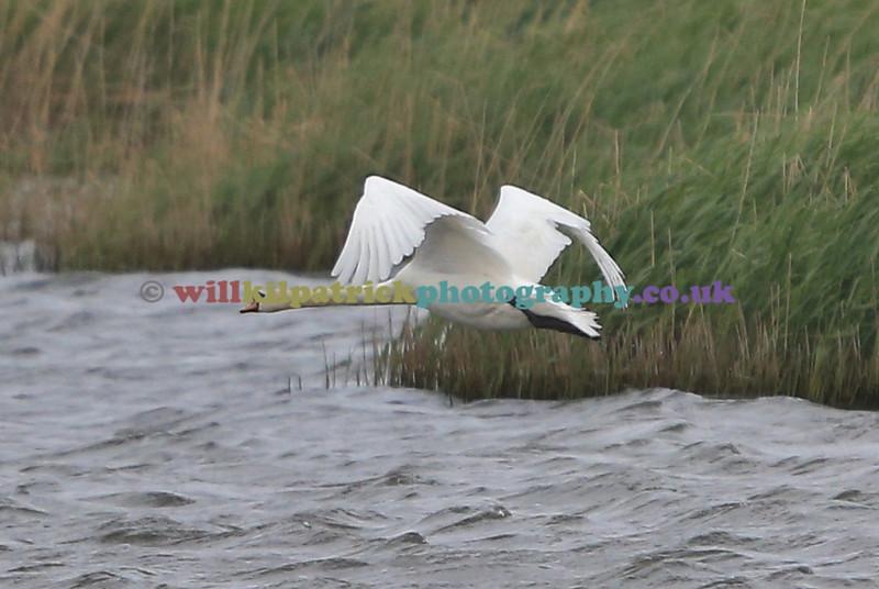 BIRDS_008