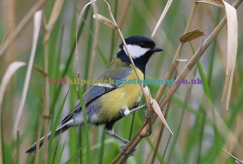 BIRDS_014