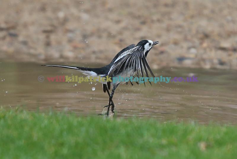 BIRDS_019