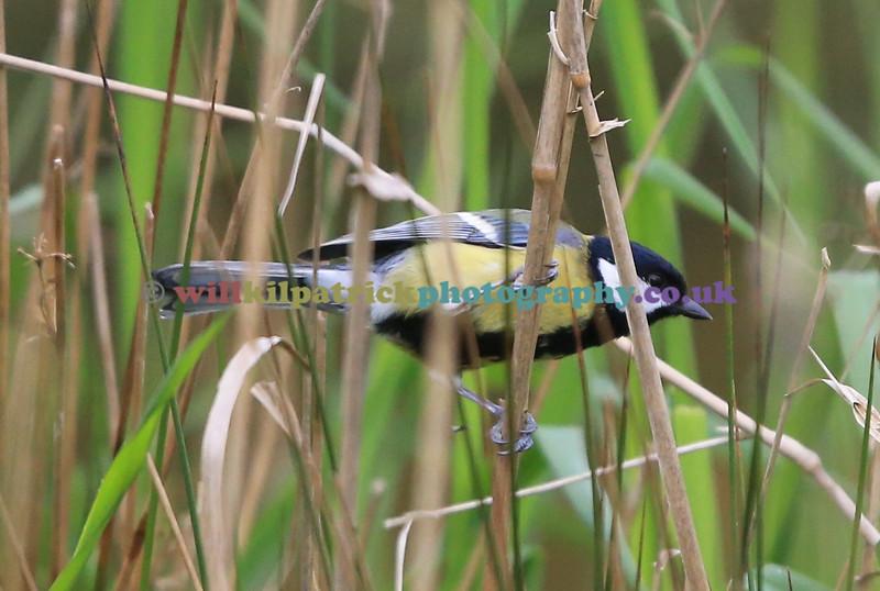 BIRDS_013