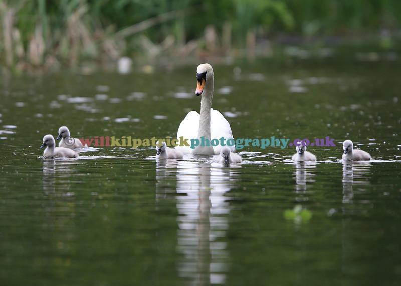 BIRDS_040