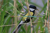 BIRDS_015
