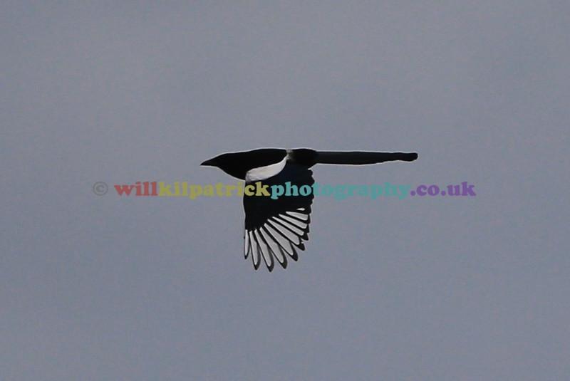 BIRDS_004