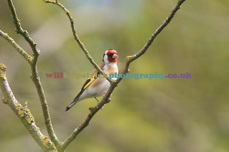BIRDS_031