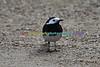 BIRDS_018