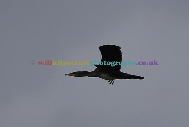 BIRDS_016