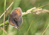 Small Heath - Great Orme, Llandudno - 6 July 2014