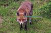 FOX_005
