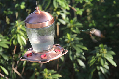 Someday I will have an awesome lens that will be able to capture the hummingbird better!!