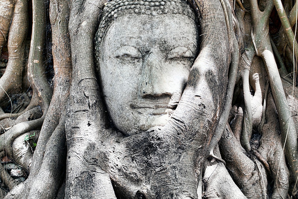A sandstone Buddha head in the roots of a Banyan tree at the ancient temple of Wat Mahathat (also known as the Temple of the Great Relic) in Ayutthaya. UNESCO declared Ayutthaya Historical Park a World Heritage Site in 1991  © 2012 KT WATSON