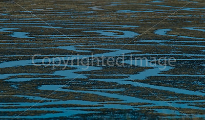 Marshland  Abstract