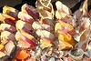 seashells shark jaws clams Caribbean sea souvenirs